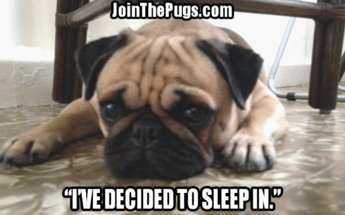 It's the weekend  - Join the Pugs