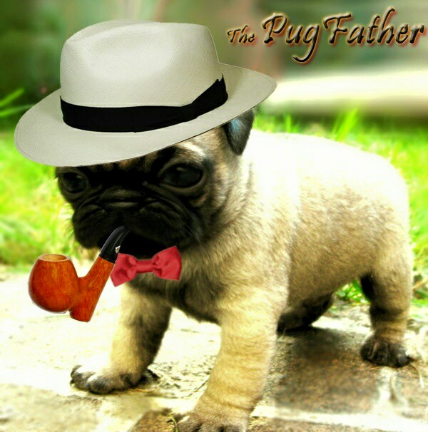 The Pug Father asks a question