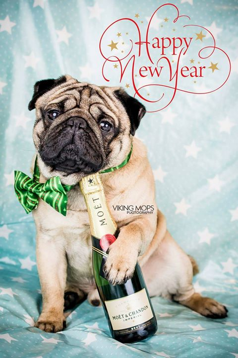 Happy New Year from Join the Pugs and Viking Mops