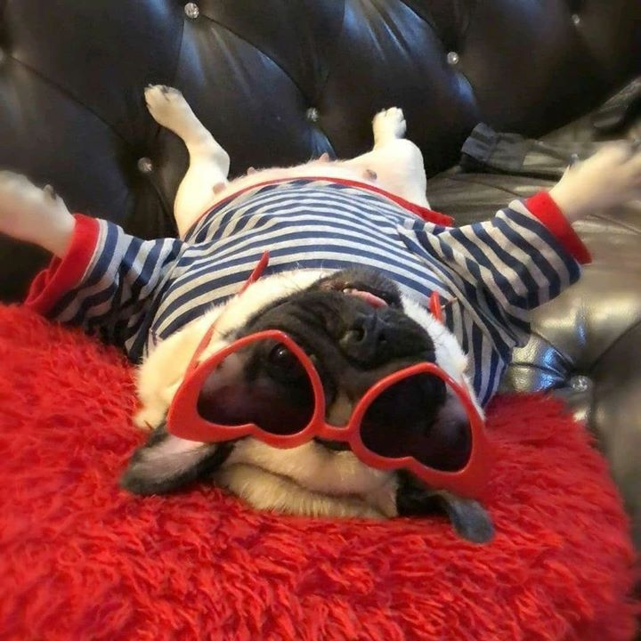 Lady Pug is too cool for school