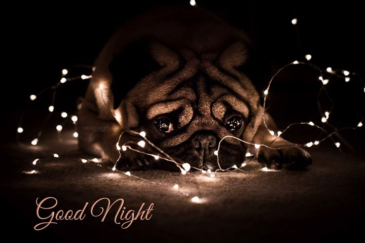 Viking Mops has a special version of Christmas night