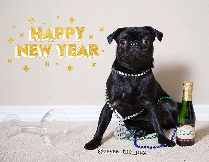 Happy New Year from Eevee the Pug and Join the Pugs