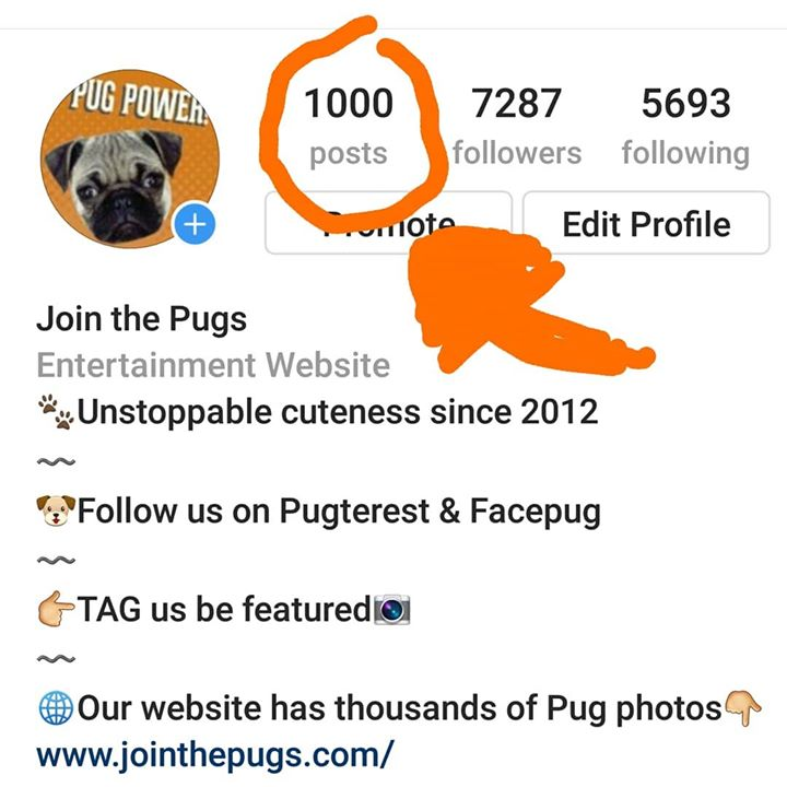 We Reach 1000 Posts on Instagram