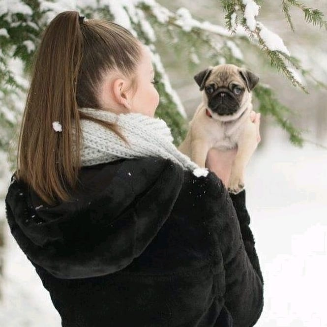 Liv the Pug is adorable
