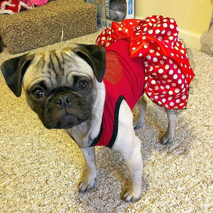 We're in love with this Pug dress