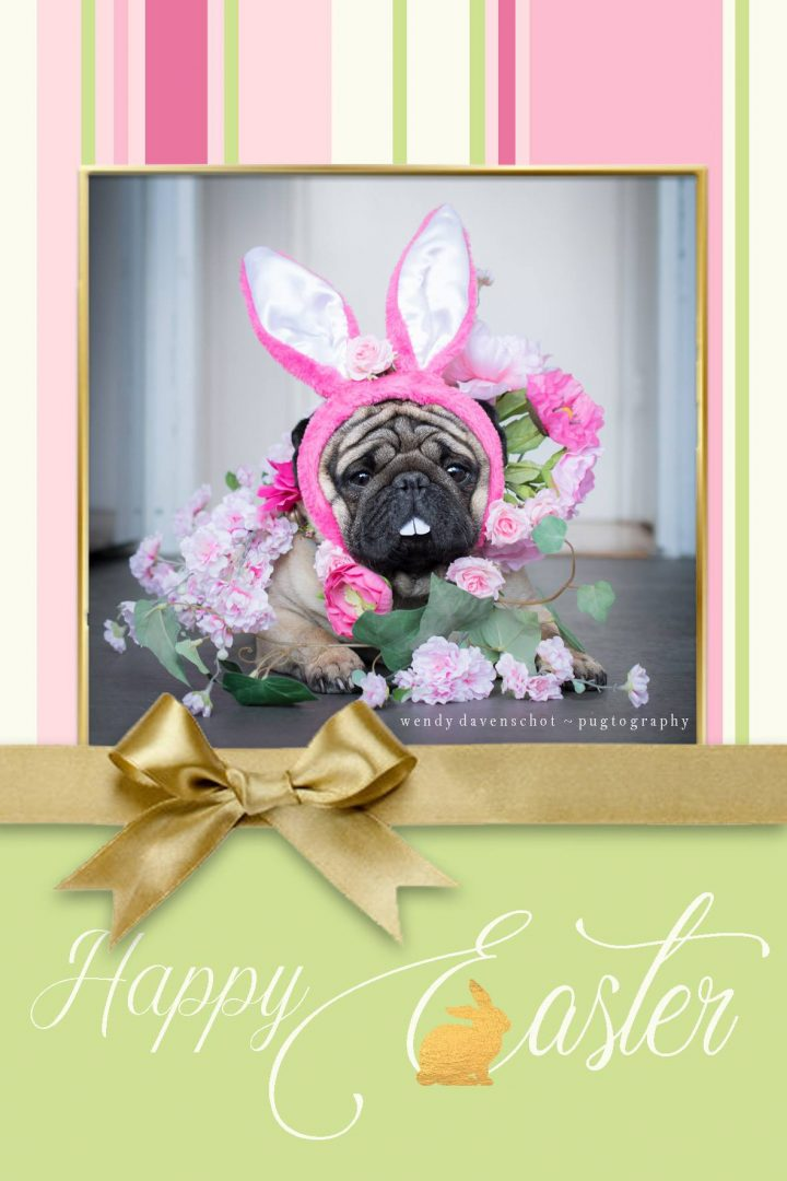 Easter and Passover Pug Cuteness is here