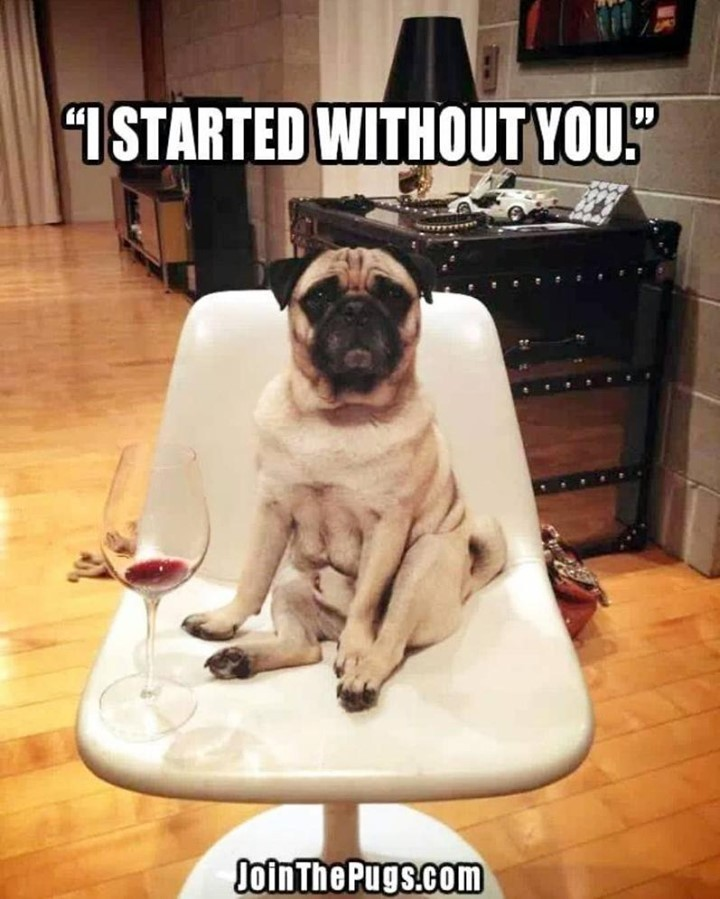 I started without you Pug